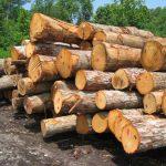 پروژه مالی شرکت صنعت چوب شمال